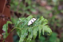 A random bug I saw perched on a leaf.